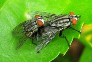 我们为什么很难打到苍蝇?
