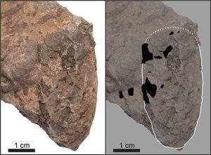 日本发现世界最小的恐龙蛋化石4.5厘米