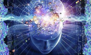 兴奋性网络和抑制性网络帮助人长期记忆
