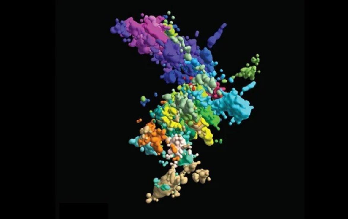 染色体真实3D影像 与课本上的不太一样